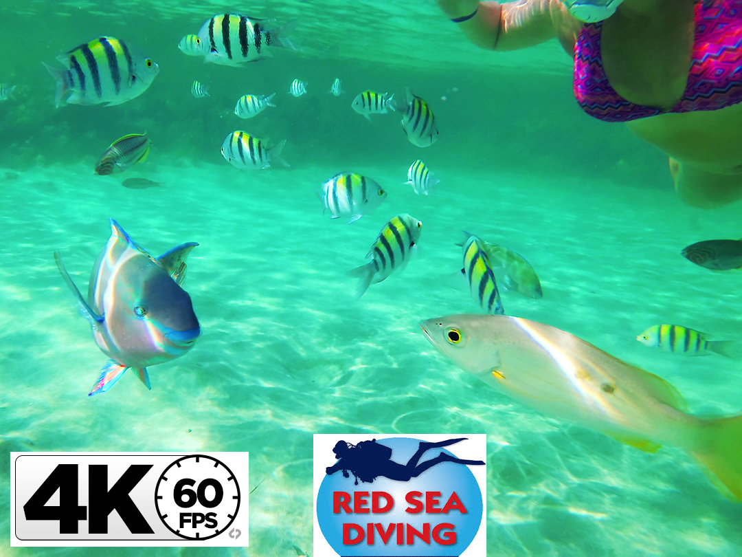 4K Red Sea, Egypt 2018, Marsa Alam